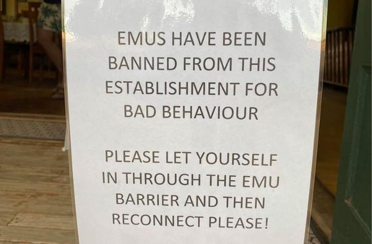 Emas são banidas de hotel por mau comportamento