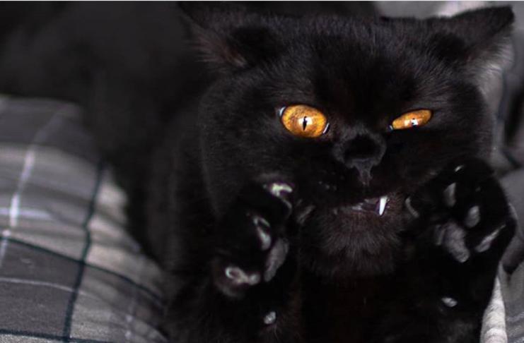 10 animais que tentaram nos assustar, mas acabaram sendo adoráveis