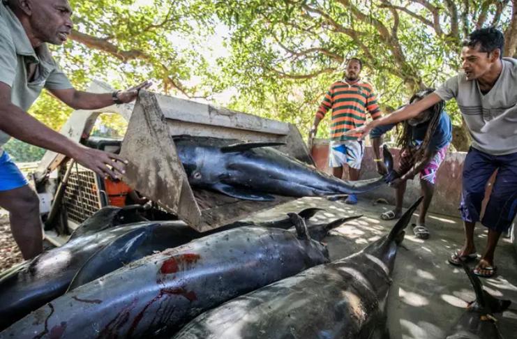 Golfinhos aparecem mortos após derramamento de petroleiro japonês