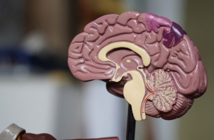 Neuralink permitirá que usuários controlem emoções