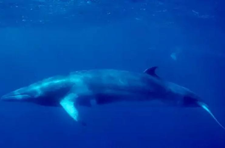 Pescador é atirado no mar depois que baleia bate no barco