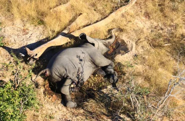 Morte de mais de 300 elefantes em Botswana é causada por toxinas na água