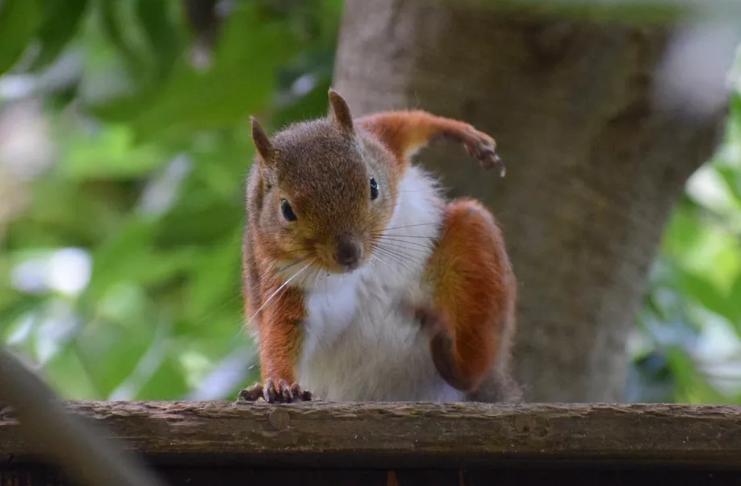 Feliz sexta-feira! Veja algumas fotos de esquilos posando como super-heróis