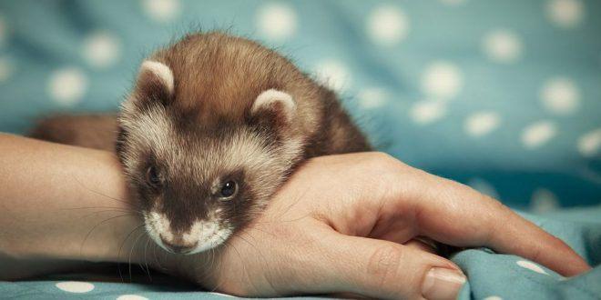 Saiba quanto custa cada um desses 10 pets exóticos para ter em casa